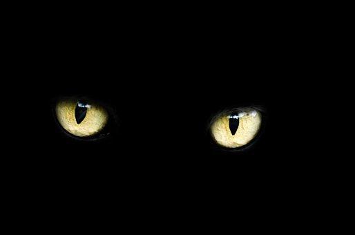 Eyes, Cat, Halloween, Black, Luck, Bad, Dark, Animal