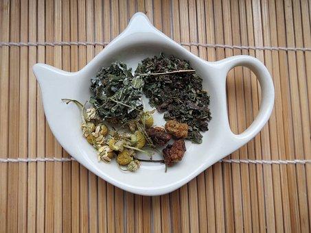 Tea, Herbs, Herb, Plant, Green, Kettle, Bamboo