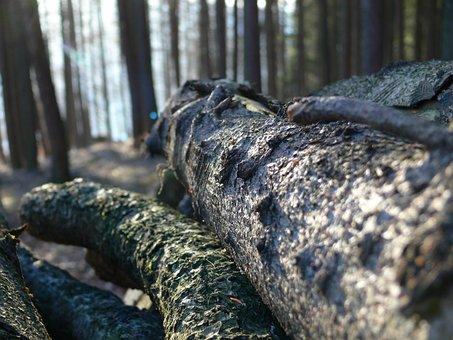 Log, Lying, Bark, Forest, Close Up, Timber, Wood
