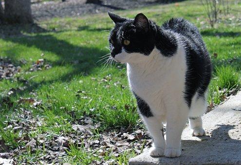 Cat, Pet, Domestic, Black, White, Rescue, Pretty