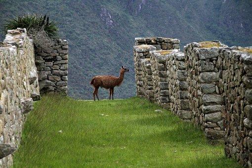 Machu Picchu, Peru, Inca, South, America, Ancient, City