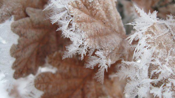Frost, Winter, Leaf, Crystal, Cold, Swnow, Flakes