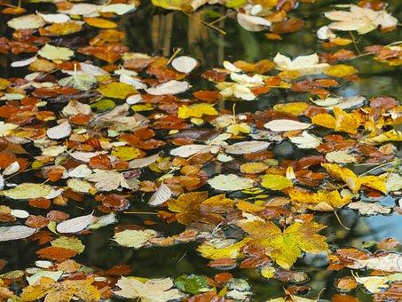 Leaves, Fall, Dead Leaf, Autumn Leaf, Autumn Leaves