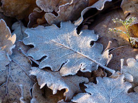 Leaves, Frost, Ice Crystals, Nature, Dead Leaf, Fall