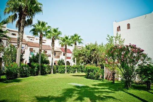 Palm Trees, Green Area, House, Bush, Garden, Meadow