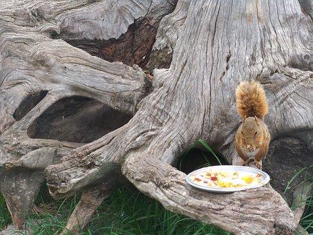 Squirrel, Nature, Animal, Park, Tree, Food