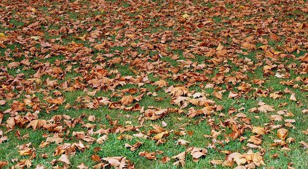 Autumn, Dried Leaves, Prato, Carpet, Nature, Garden