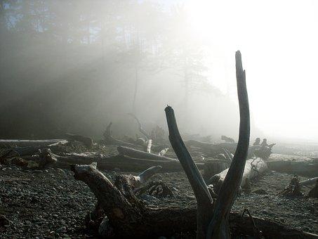 Driftwood, Beach, Fog, Sun, Ray, Mist, Ocean, Nature