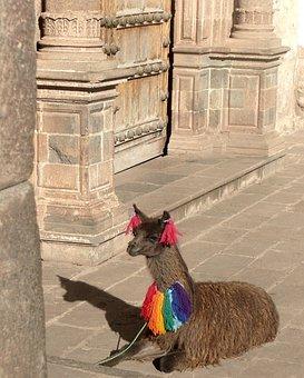 Alpaca, Peru, Cusco, Inca, Cuzco, Peruvian, Andes