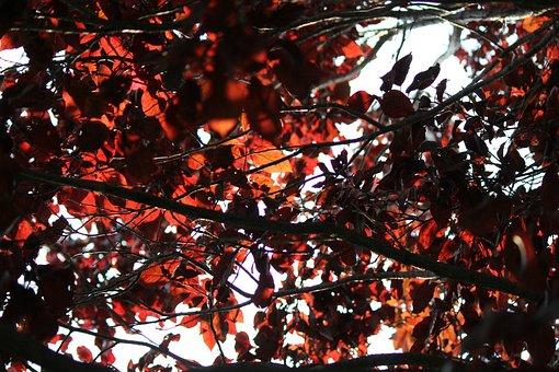 Flowering Plum Tree, Tree, Plum, Leaf, Leaves, Red, Sky