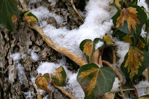 Snow, Snowflakes, Winter, Ice Crystal, Snowfall, Cold