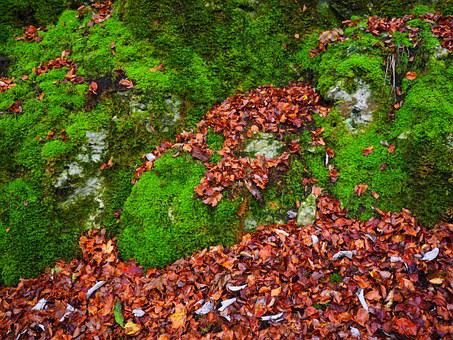 Stones, Leaves, Autumn, Moss, Stone, Bemoost, Green