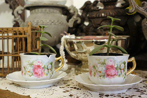Tea Cups, Vintage, Plants