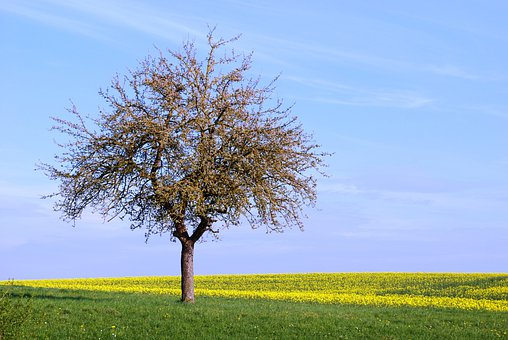Tree, Solitary, Field, Peaceful, Quiet, Daytime, Spring