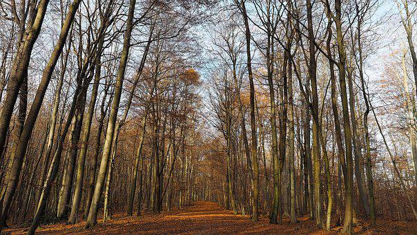 Fall, Forest, Trees, Nature, Landscape, Wood, Field