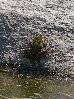 Frog, Stalking, Batrachian, Raft, Amphibious, Texture