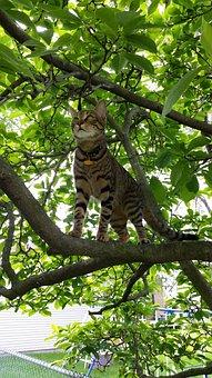 Feline, Hunting, Tabby, American Shorthair, Cat Lovers