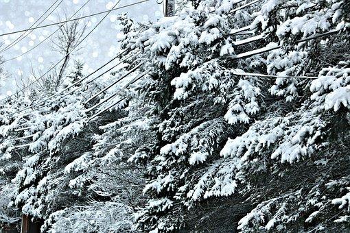Storm, Snow, 2019, Hinckley, Ohio, Power Lines, Cold