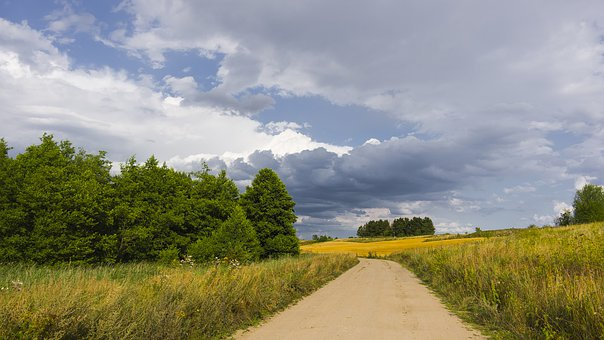 Field, Corn, Clouds, Tree, Agriculture, Summer