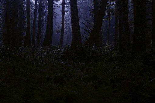 Dark Forest, Creepy Woods, Woodland, Night, Midnight