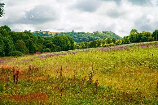 Field, Wild Flowers, Fields, Flowers, Summer, Plant