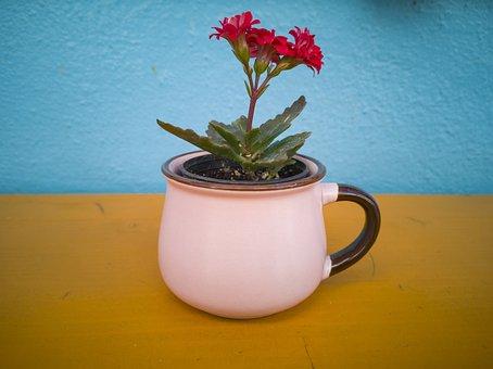 Flower, Flowerpot, Decor, Red, Blue, Yellow, Decoration