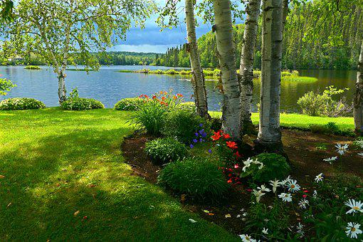 Landscape, Nature, Trees, Flowers, Birch, Lake, Green