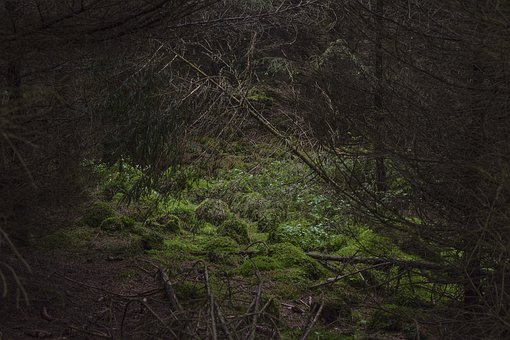Nature, Forest, Landscape, Trees, Secret, Wood