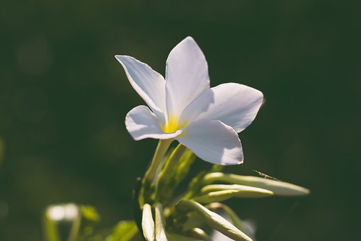 Liliales, Flower, Flowers, Nature, Leaves, Summer