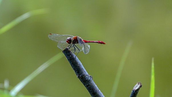 Dragonfly, Insect, Macro, Nature, Wing, Animal, Green