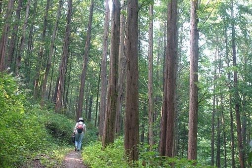 Metasequoia Road, Meta Sequoia
