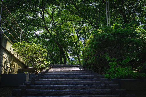 Stairs, Summer, Natural, Beautiful, Green, Light, Plant