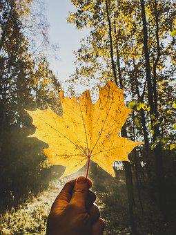Nature, Leaf, Forest, Natural, Relax, Autumn, Trees