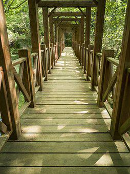 Bridge, Nature, Landscape, Forest, Water, River, Walk