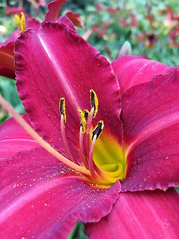 Flower, Flower Stamp, Nature, Plant, Blossom, Bloom