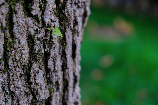 Bud, Life, Growth, Floorplan, Spring, Nature, Plant