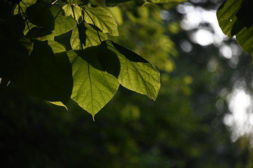 Leaves, Sunlight, Woods, Forest, Peaceful, Rest, Green