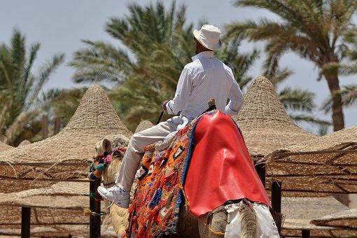Camel, Rider, On Horseback, Beach, Summer, Palm Trees