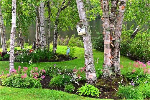 Landscape, Nature, Birch, Trees, Scenic, Green, Summer