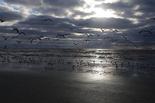 Seagull, Sea, Beach, Sky, Cloud, Bird, Nature, Ocean