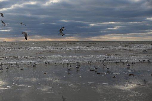Seagull, Beach, Sea, Bird, Water, Sky, Nature, Clouds