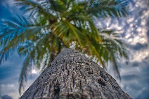 Paradise, Palm, Tropics, Nature, Sunset, Tree, Coconut