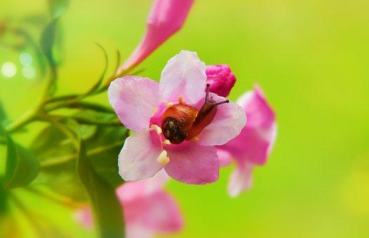 Zaroślarka Total, Molluscum, Flower, Posts, The Petals