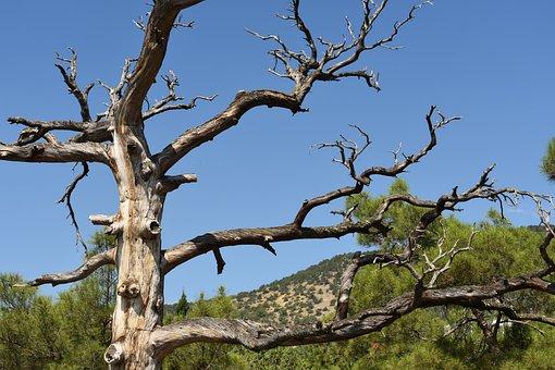 Tree, Dry, Sloppy, Landscape, The Picturesque
