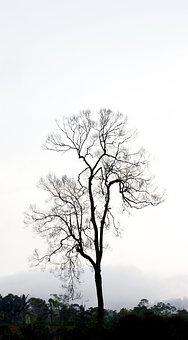 Tree, Nature, Indonesia, Landscape, Travel, Sky, Happy