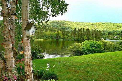 Landscape, Nature, Trees, Birch, Lake, Water, Mountain