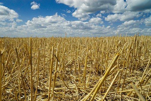 Stubble, Harvest, Agriculture, Cereals, Harvest Time