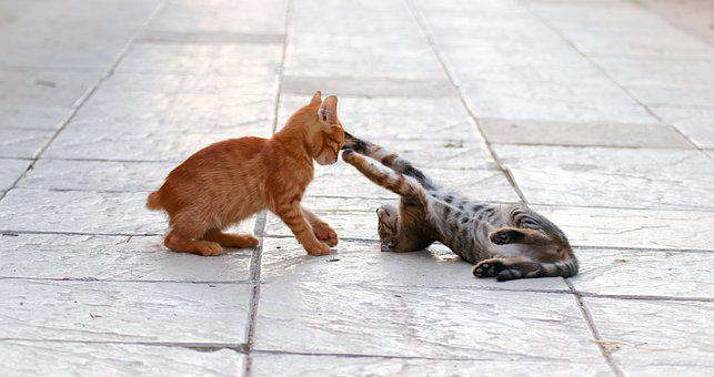 Cat, Fight, Young, Play, Cat Baby, Animal World