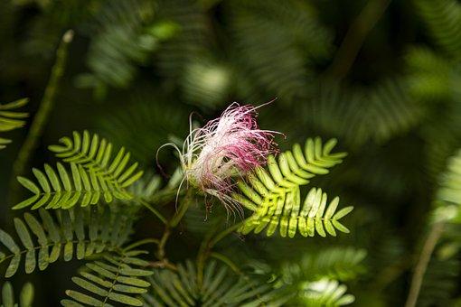 Plant, Green, Flower, Blossom, Bloom, Nature, Leaf