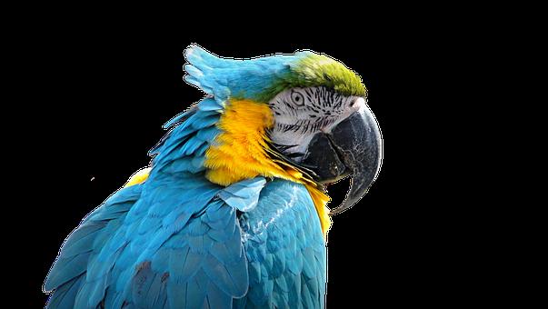 Parrot, Bird, Ara, Exotic, Plumage, Blue, Colored